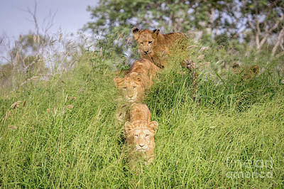 Photograph - Follow The Leader by Jennifer Ludlum
