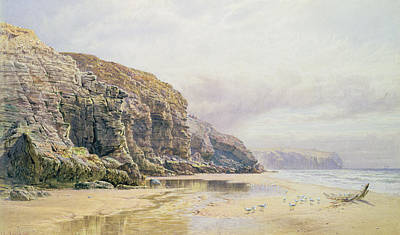 Feeding Bird Painting - The Coast Of Cornwall  by John Mogford