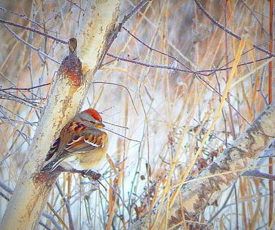 Sparrow Photograph - The Cold Winds Of Winter by Karen Cook
