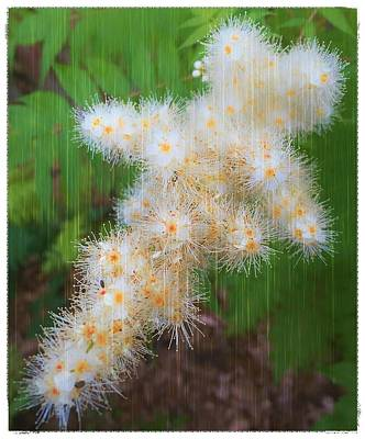 Photograph - The Colony Of Tiny Flowers by Mario MJ Perron