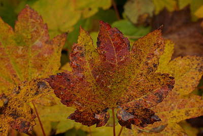 Forest Floor Photograph - The Color Of Autumn by Jeff Swan