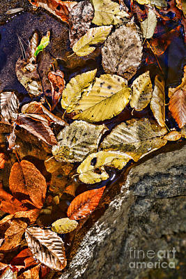 Autumn Leaf On Water Photograph - The Color Of Fall by Paul Ward