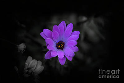 Photograph - The Color Of Passion II by Al Bourassa
