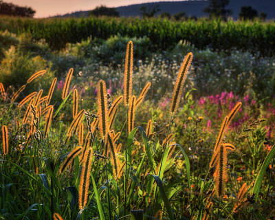 Connecticut Landscape Photograph - The Color Of Summer 2017 by Bill Wakeley