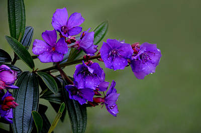 The Color Purple Original