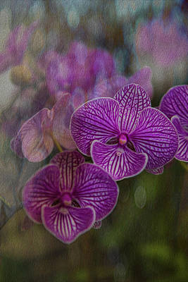 Photograph - The Color Purple by Patricia Dennis