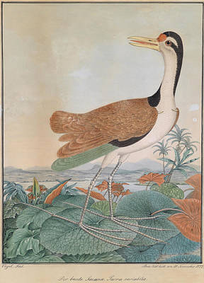 Drawing - The Colorful Jacana Walking Across Lily Leaves In The Background Mountains And Sea Coast by Aloys Zotl