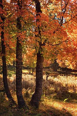 Photograph - The Colors Of An Autumn Forest  by Saija Lehtonen