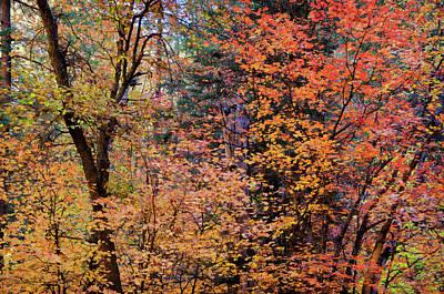 Photograph - The Colors Of Autumn In Pastels by Saija Lehtonen