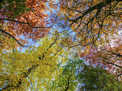 Photograph - The Colors Of Autumn by Michael Niessen