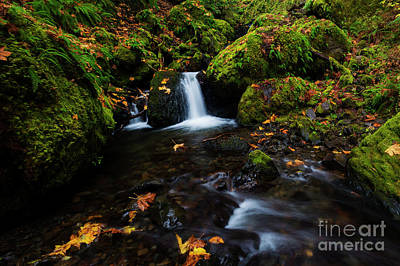 Photograph - The Colors Of Autumn by Mike Dawson