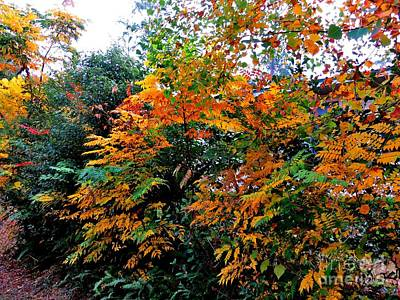 Photograph - The Colors Of Autumn by Tim Townsend