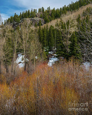 Photograph - The Colors Of Colorado by Stephen Whalen
