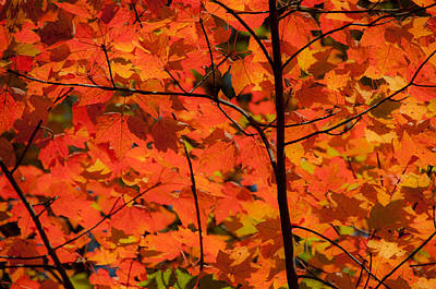 Photograph - The Colors Of Fall by Brenda Jacobs