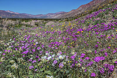 Photograph - The Colors Of Spring Super Bloom 2017 by Peter Tellone