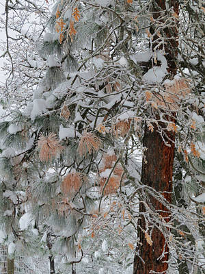 Photograph - The Colors Of Winter by Jacqueline  DiAnne Wasson