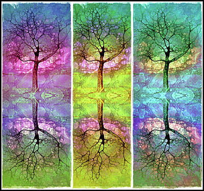 Photograph - The Colourful Dreams Trees Have To Share by Tara Turner