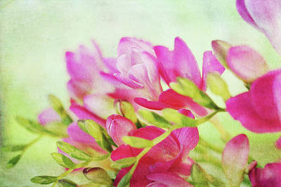 Art Print featuring the photograph Colour Full Freesia by Connie Handscomb