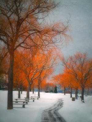 Summerland Photograph - The Colours Of Winter by Tara Turner
