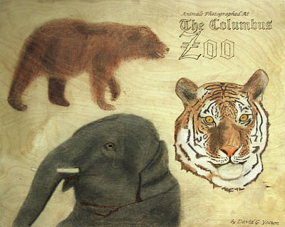 Pyrography - The Columbus, Oh Zoo by David Yocum