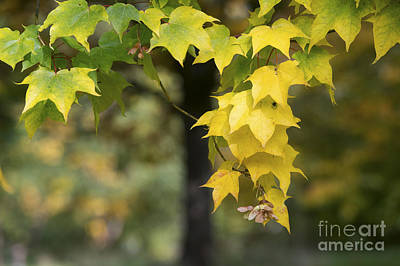 The Coming Of Autumn Art Print by Tim Gainey