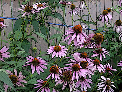 The Coneflowers Art Print