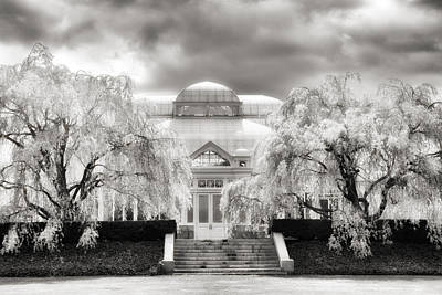 Bronx Digital Art - The Conservatory Cherry Blossoms by Jessica Jenney