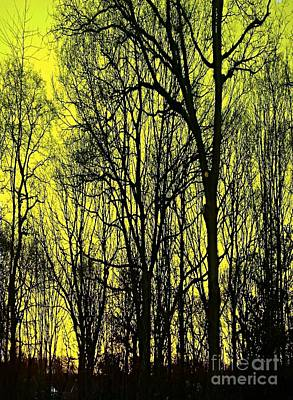 Photograph - The Copse In Yellow by Joan-Violet Stretch