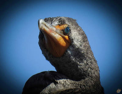 Photograph - The Cormorant, No. 4 by Elie Wolf