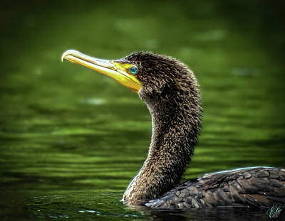 Photograph - The Cormorant, No. 9 by Elie Wolf