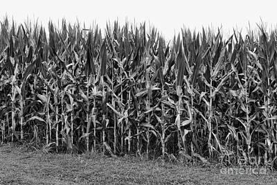 Cornfield Photograph - The Cornfield by Paul Ward
