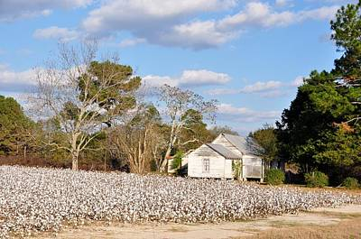 Photograph - The Cotton Picker's House by Jan Amiss Photography