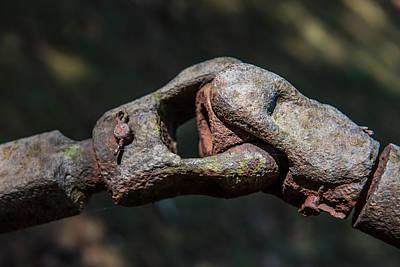 Photograph - The Coupling by Randy Walton