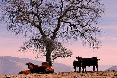 Photograph - The Cows Come Home by Matt Harang