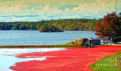 Photograph - The Cranberry Farm On Cape Cod by Gina Cormier