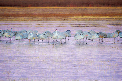 Photograph - The Cranes Of Bosque by Marla Craven
