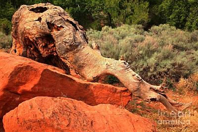 Photograph - The Creature At Red Cliffs by Adam Jewell