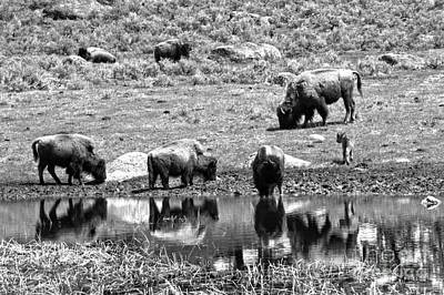 Photograph - The Crew At The Watering Hole Black And White by Adam Jewell