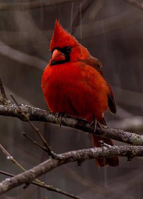 Photograph - The Crimson Suit by John Harding