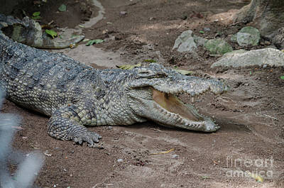 Photograph - The Croc by Michelle Meenawong