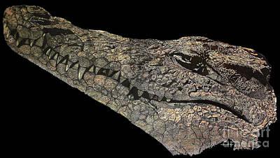 Crocodile Mixed Media -  The Crocodile by Nancy Mergybrower