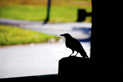 Art Print featuring the photograph The Crow Awaits by Karol Livote