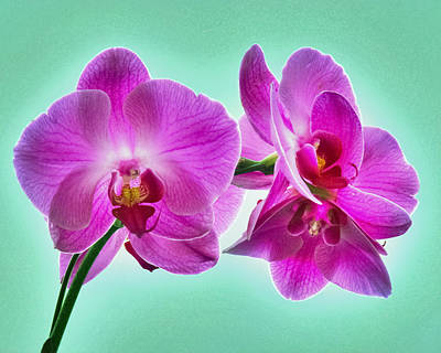 Photograph - The Crystal Orchids by Krystle DiNicola