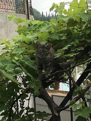 Cat Photograph - The Curious Cat by Mikhail Zhirnov