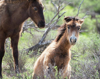 Photograph - The Curious Little Filly  by Saija Lehtonen