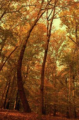 Photograph - The Curved Tree In The Woods by Angie Tirado