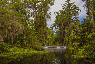 Art Print featuring the photograph The Cypress Garden by Steven Ainsworth