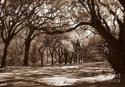 Old Country Roads Photograph - The Dance - Sepia by Carol Groenen