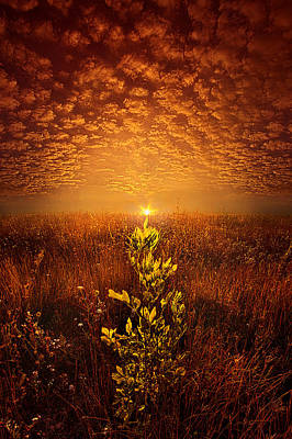 Photograph - The Dance We Shared by Phil Koch