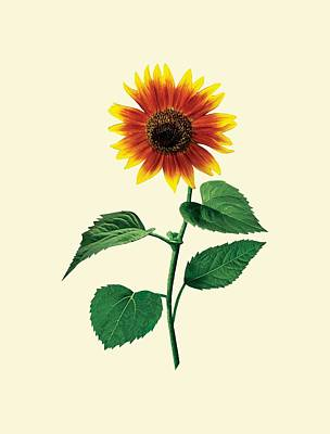 Photograph - The Dancing Sunflower by Susan Savad